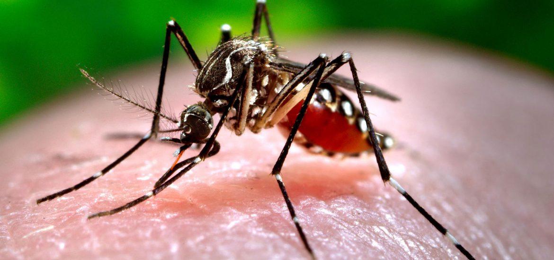 mosquito tigre en malaga