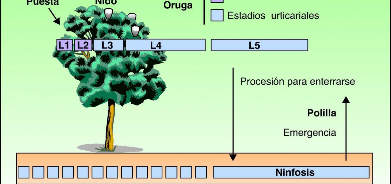 procesonaria del pino en Málaga