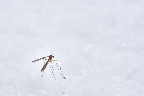 Mosquitos Aliens