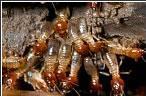termitas2