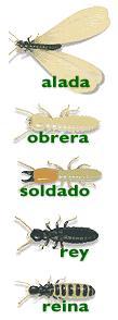 termitas4