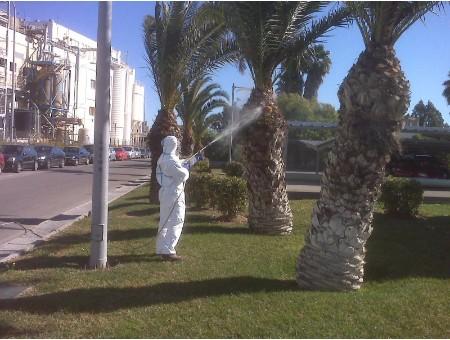 tratamientos fitosanitarios palmeras Málaga
