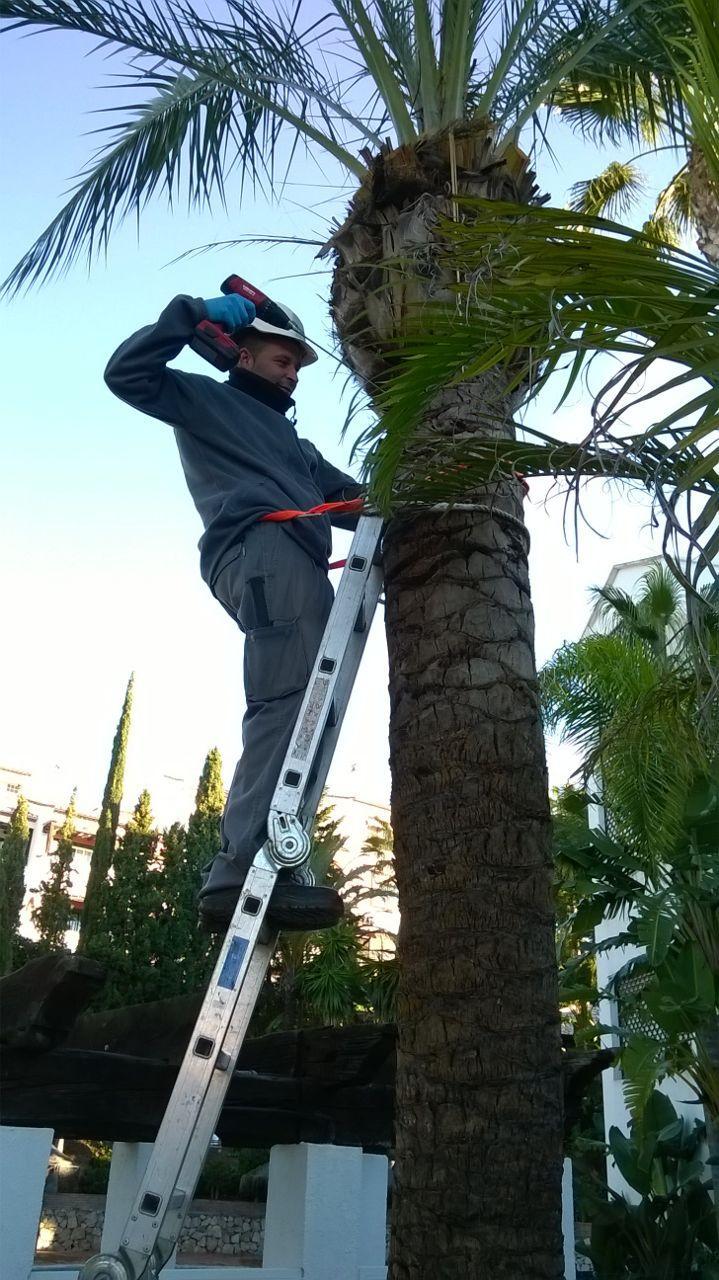 fitosanitarios palmeras Málaga