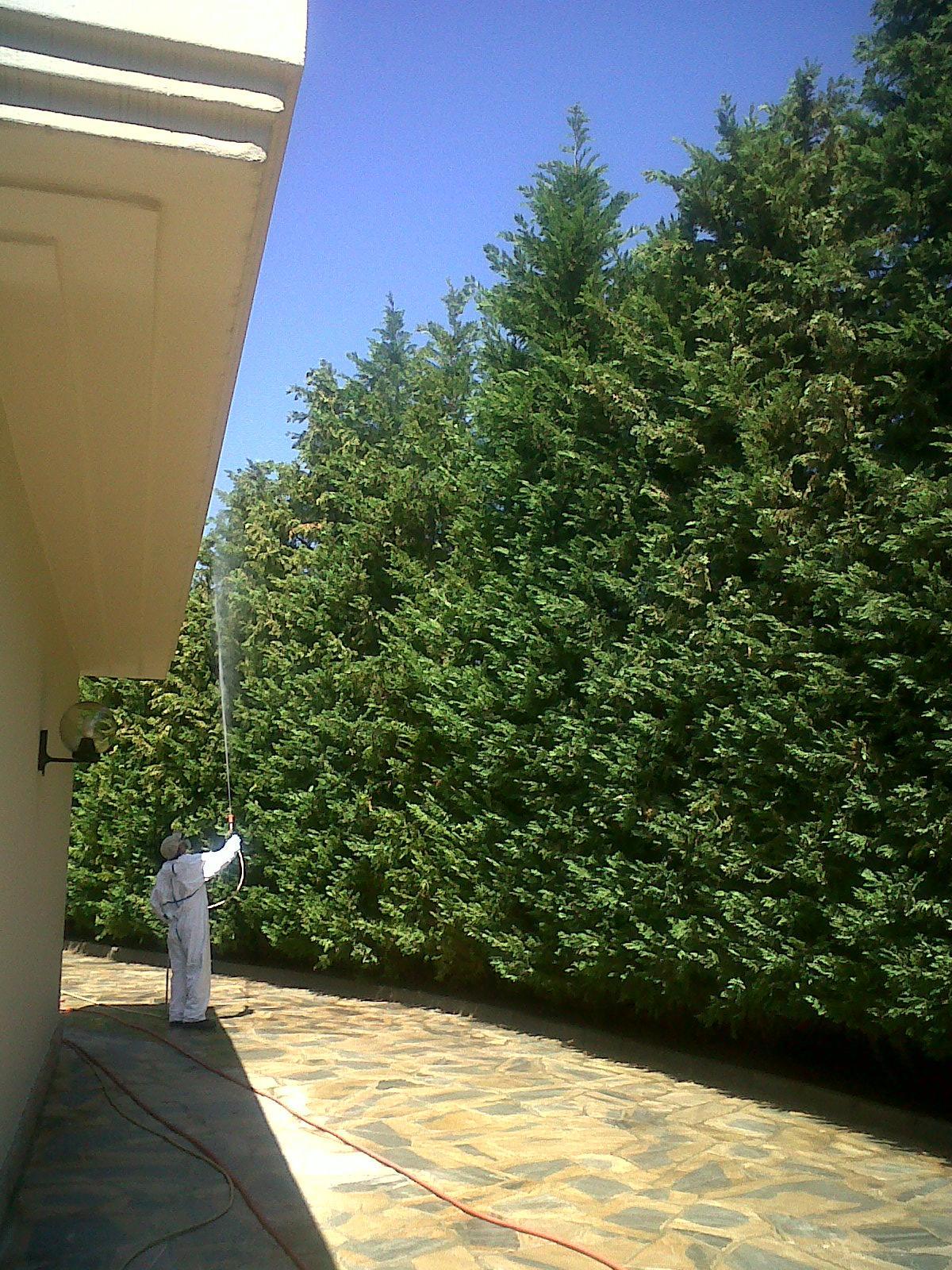 fitosanitarios pinos Málaga